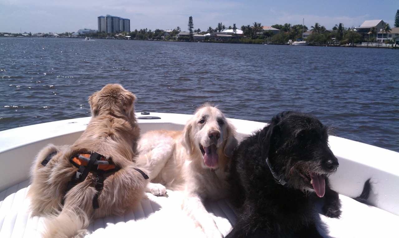 Dogs on Boat