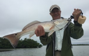 David's Redfish